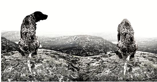 Audun Nygaard vant 2. runde i Årets fotograf med dette – manipulerte – naturbildet. Juryens valg og begrunnelse – eller mangel på begrunnelse – vakte debatt her på Fotografi.no