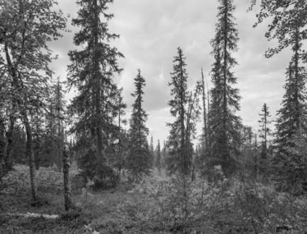 Utstilling: Per Berntsens nye landskap