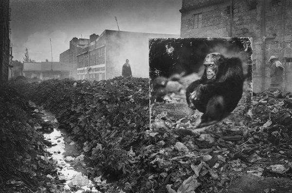Nick Brandt, fra serien Inherit The Dust på Willas Contemporary.