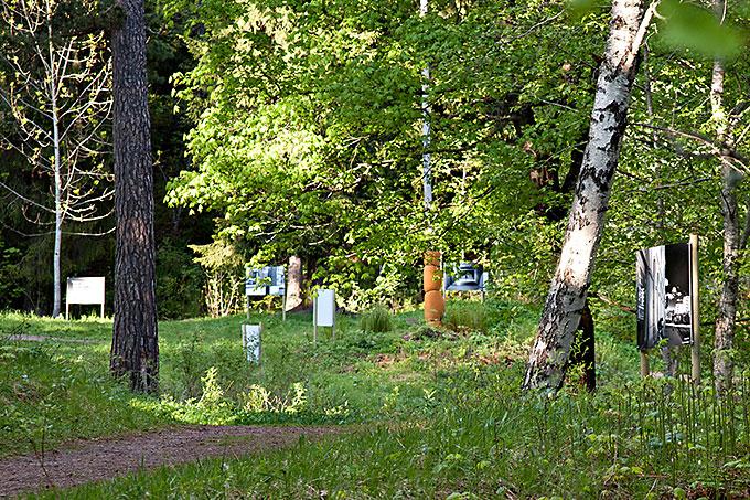 Helgens tips: På skogstur med Drammen Fotoklubb