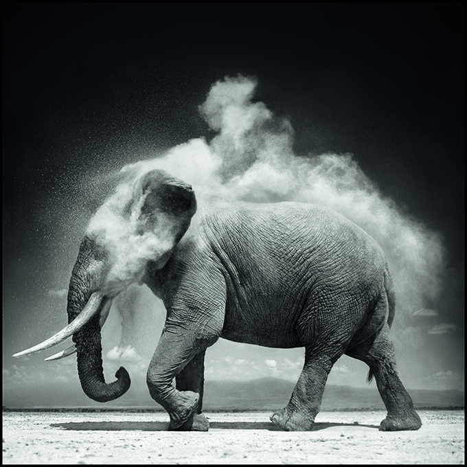 © Nick Brandt. Elephant with Exploding Dust
