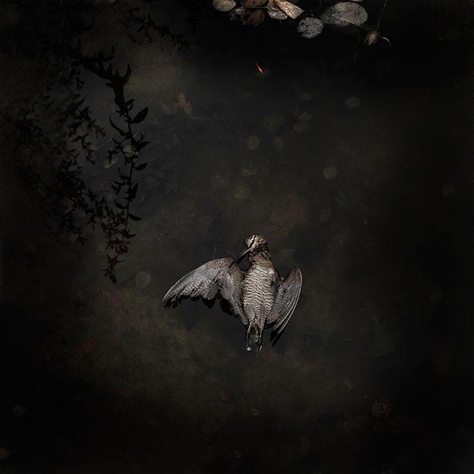 © Einar Sira