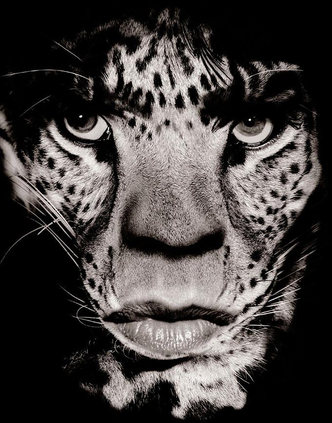 Mick Jagger. Foto: Albert Watson
