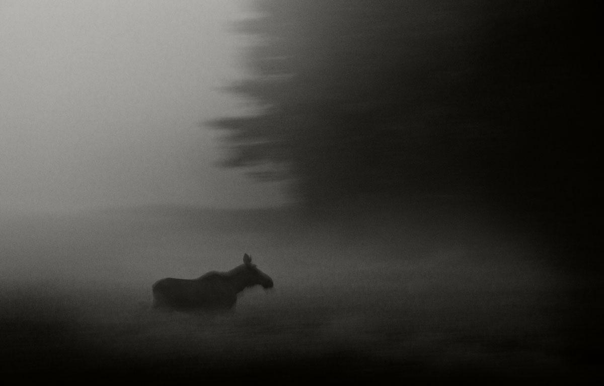 © Heikki Willamo